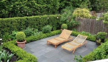 Plants to Create Privacy in Your Garden